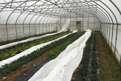 (1/6) After applying Eden BlueGold® in a 30'x72' high tunnel, I received Amazing Results.