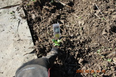 (3/11) Plants were sprayed with 1 teaspoon per gallon of Blue Gold™ Base Blend.