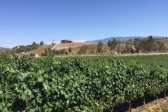 (2/4) 18 of these 30 acres are 3-year-old vines that have been raised in the Blue Gold™ program and have produced grapes for the last two years of production! This is special because the industry does not see normal production until around 5 years on average.