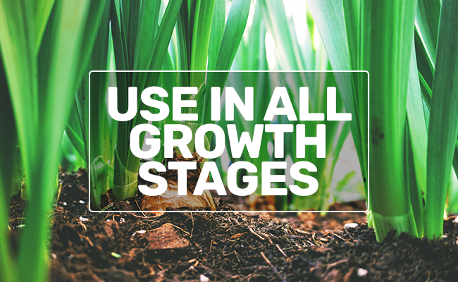 allgrowthstages